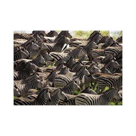 Educa Puzzle Impossível Manada Zebras 500 Peças 14138